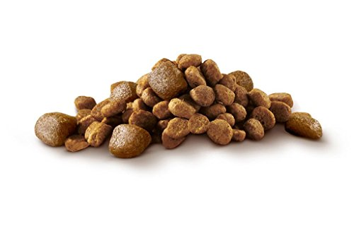 PURINA ONE Mini Pienso para Perro Adulto Buey y Arroz 8 x 800 g